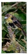 Lemon-rumped Tanager Molting Beach Towel