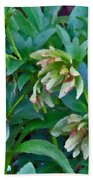 Lenten Roses Beach Towel