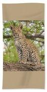 Leopard Cub Gaze Beach Towel