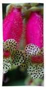 Leopard Flower - K. Digitaliflora Beach Towel