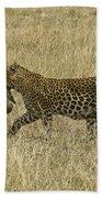 Leopard On The Move Beach Towel