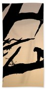 Leopard Sitting In A Tree Beach Towel