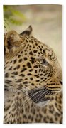Leopard Zimbabwe Beach Towel