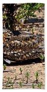 Lesser Nighthawk Chordeiles Acutipennis Beach Towel