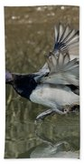Lesser Scaup Drake Beach Towel