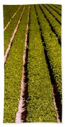 Lettuce Farming Beach Towel