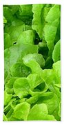 Lettuce Sing Beach Towel