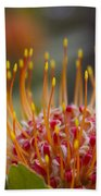 Leucospermum Pincushion Protea - Tropical Sunburst Beach Towel