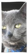 Library Cat Beach Towel