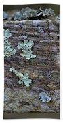 Lichen Macro II Beach Towel