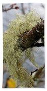 Lichen On Tree Beach Towel