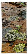 Lichens Along Trail To Plain Of Six Glaciers In Banff National Park-alberta-canada Beach Towel