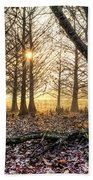 Light In The Trees Beach Towel