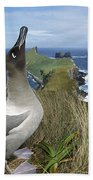 Light-mantled Albatross Sky-pointing Beach Towel