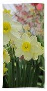 Light Yellow Daffodils Beach Towel