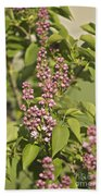 Lilac In Spring Beach Towel