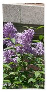 Lilacs Up Against The Wall Beach Towel