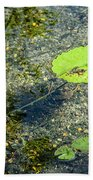 Lily Leafs On The Water Beach Towel