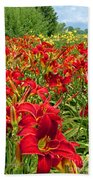 Lily Patch Beach Towel