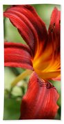 Lily Red  Beach Towel