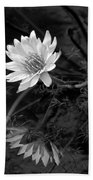 Lily Reflection Beach Towel