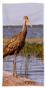 Limpkin Bird Beach Towel