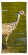 Limpkin With A Snack Beach Towel