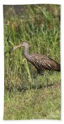 Limpkin With Apple Snail Beach Towel