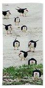 Line Up Black Skimmers  Beach Towel
