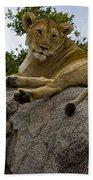 Lion   #1646 Beach Towel