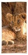 Lion Cub Panthera Leo Beach Towel