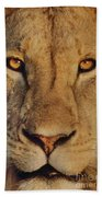 Lion Face  Beach Towel