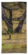 Lion In The Dog House Beach Towel