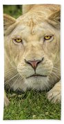 Lion In The Grass Beach Towel