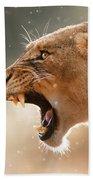 Lioness Displaying Dangerous Teeth In A Rainstorm Beach Sheet