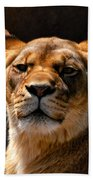 Lioness Hey Are You Looking At Me Beach Towel