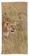 Lioness, Kenya Beach Towel