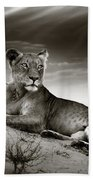 Lioness On Desert Dune Beach Towel by Johan Swanepoel