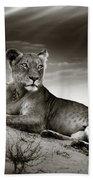 Lioness On Desert Dune Beach Sheet