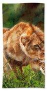 Lioness Stalking Beach Towel