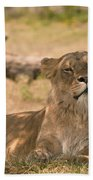 Lioness Beach Towel