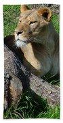Lioness2 Beach Towel