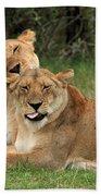 Lions Of The Masai Mara  Beach Sheet
