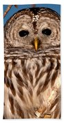 Lit Up Owl Beach Towel