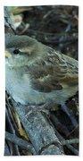 Little Bird Waiting Beach Towel