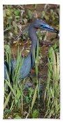 Little Blue Heron 3 Beach Towel