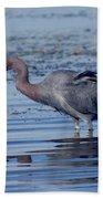 Little Blue Heron Egretta Caerulea Beach Towel
