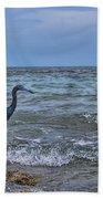 Little Blue Heron Beach Towel
