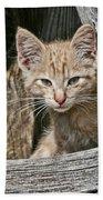 Little Charlie - Kitten By Wagon Wheel - Casper Wyoming Beach Towel