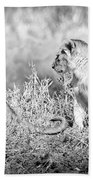 Little Lion Cub Brothers Beach Towel by Adam Romanowicz